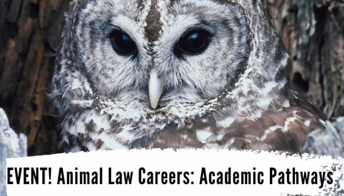 Animal Law Careers: Academic Pathways