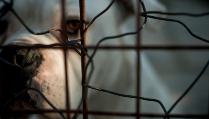 Enforcing Against Animal Cruelty: Prosecution & Beyond