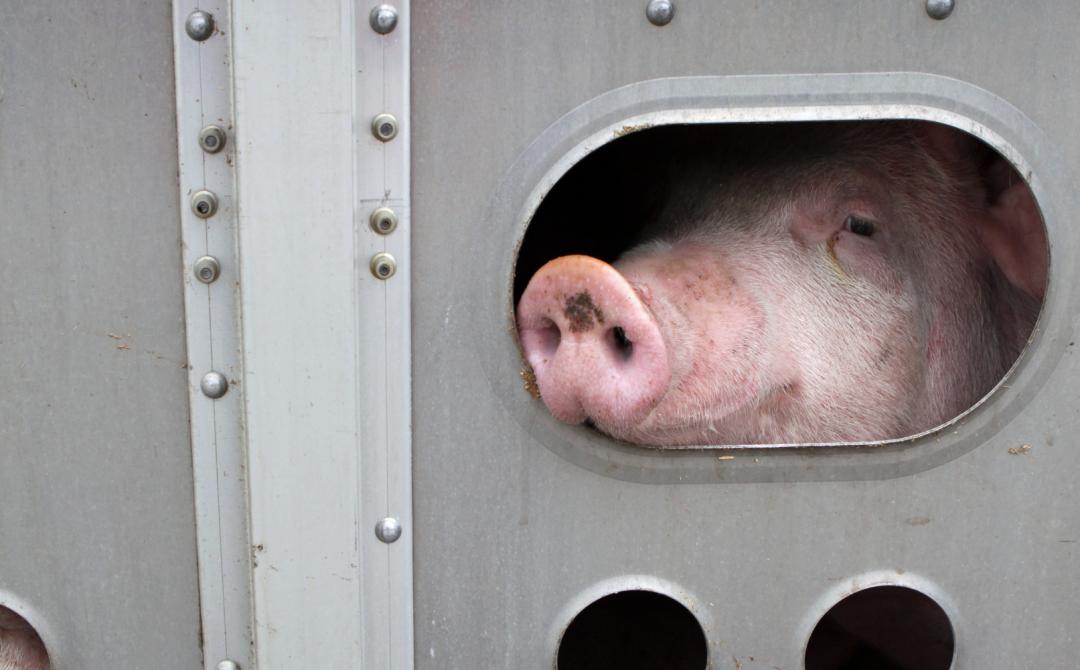 Farmed Animals & Trade